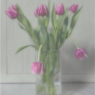 Commended-Tulips in Pink-Alison J Fryer