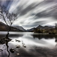 Highly Commended-Lone Tree-Terence O'Connor