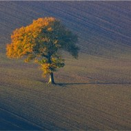 First-Autumn Tree-Van Greaves