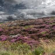 Dramatic Moorland-John Moore CPAGB BPE1