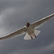 Highly Commended-Tern-Mike Troth