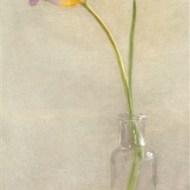 -Tulip-Barbara Hawthorne