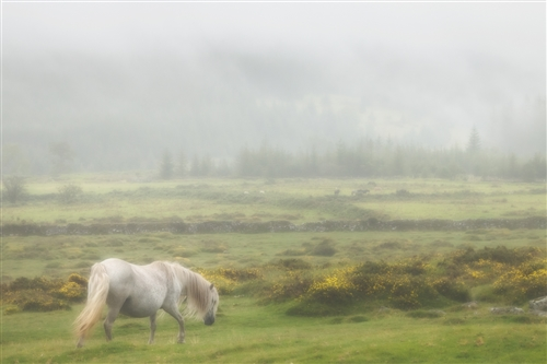Commended-Dartmoor in the Mist-Sandra Starke