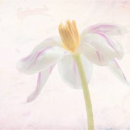 Commended-Flower Impression-Sandra Starke
