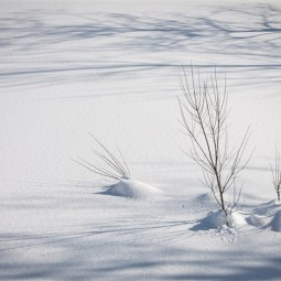 Highly Commended Shadows in the Snow Anne Watkinson