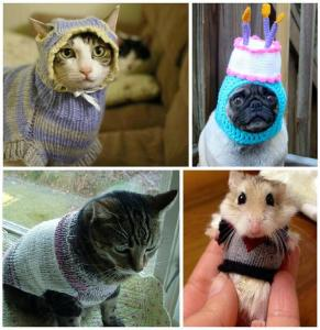 animals in clothes