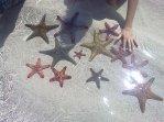 Le stelle marine ti si attaccano addosso con delle piccole ventose che fanno un po' senso...