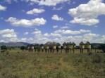 Il lodge perfetto per avvistare mandrie di elefanti, Tsavo