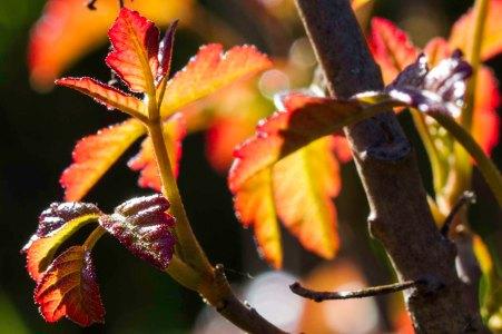 early bloom poison oak