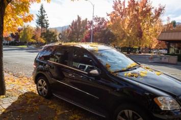 car leaves