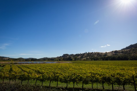 river pond vineyard