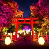 今年も「下鴨神社(賀茂御祖神社)」で開催決定!チームラボの世界観に感動