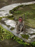 There were dozens of monkeys/ Auf Elephanta Island gibt es dutzende Affen