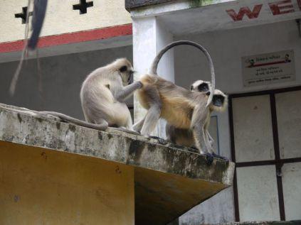 As always: monkeys/ Wie immer: Affen