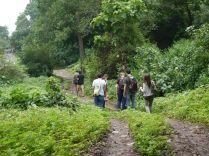 A walk through the woods/ Ein Urwaldspaziergang