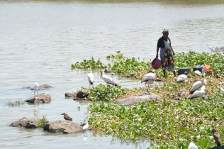 Fisherwoman and storks