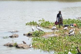 Fisherwoman and storks