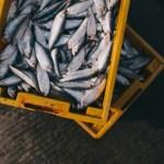 【要注意!!】食用の魚介類に住んでいる虫?アニサキスの話