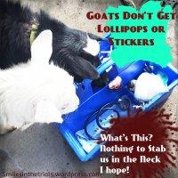 Goats Don't Get a Lollipop or a Sticker