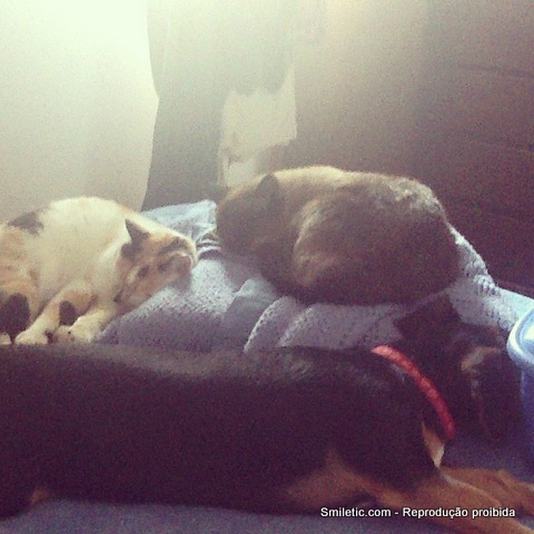 gatos e cã