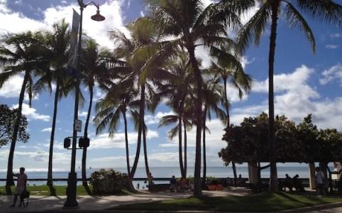 anamile-hawaii02