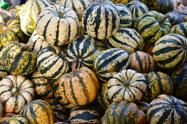 Yellow and green pumpkins from the Pumpkin Festival in Ludwigsburg 2018