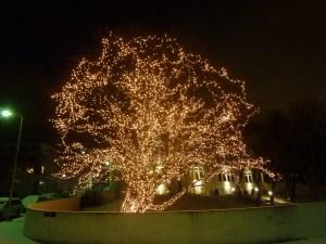 Mon fameux arbre !