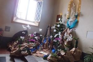 Crèche et araucaria à la cathédrale