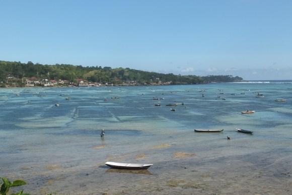 La culture des algues est très développée sur Lembongan