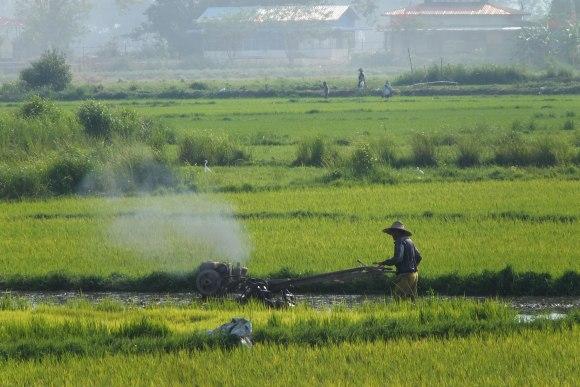Vue sur les rizières en rentrant (et sur le premier engin agricole motorisé du séjour !)