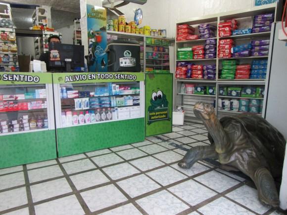 Il y a des tortues partout ici, même dans les pharmacies ;-)