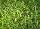 Drought free lawn