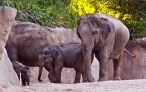 The elephant kids.