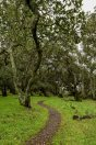 Hiking into the clouds - Skyline Wilderness Park Napa | Smiling in Sonoma