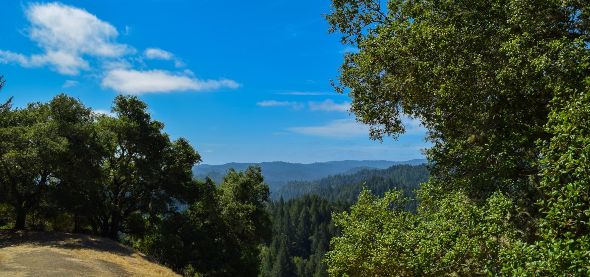 Armstrong Woods East Ridge Trail | Smiling in Sonoma