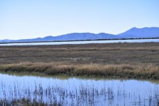 Marsh forever! Do you see Mt Tam?