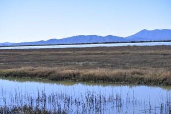 Marsh forever! Do you see Mt Tam?