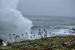 Boom! Waves crashing behind the pink pom poms