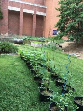 garden long