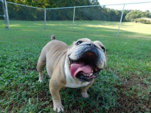 Smith Farms Boarding dog daycare