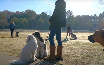 Smith Farms Boarding Kennels – Group Training for Dogs in Metro Atlanta