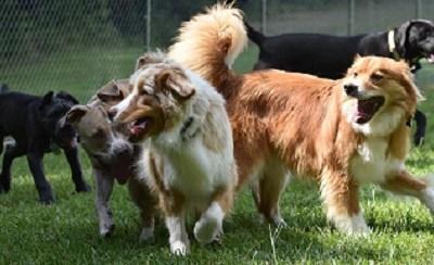 Fun at Dog Parks or Doggie Daycare