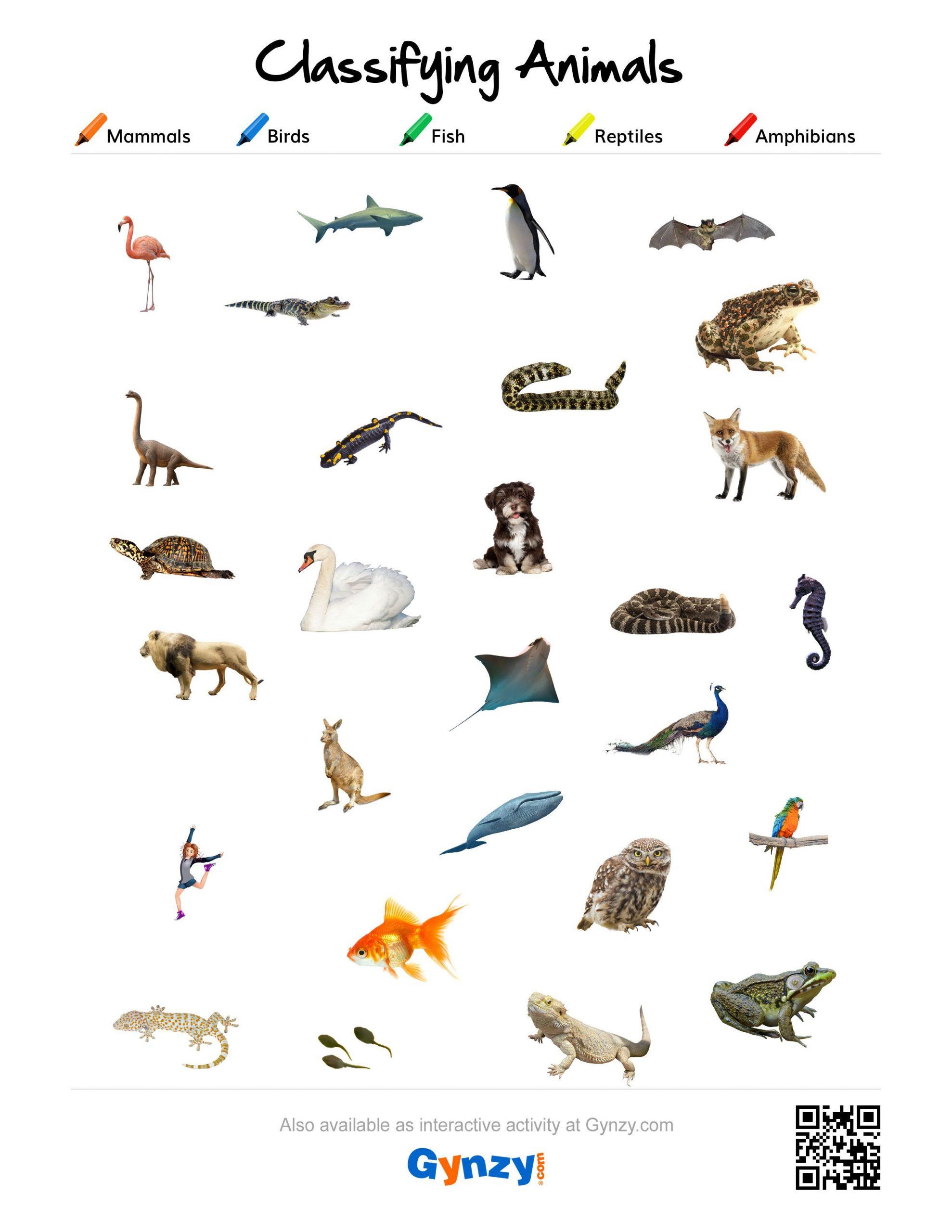 30 Animal Classification Worksheet
