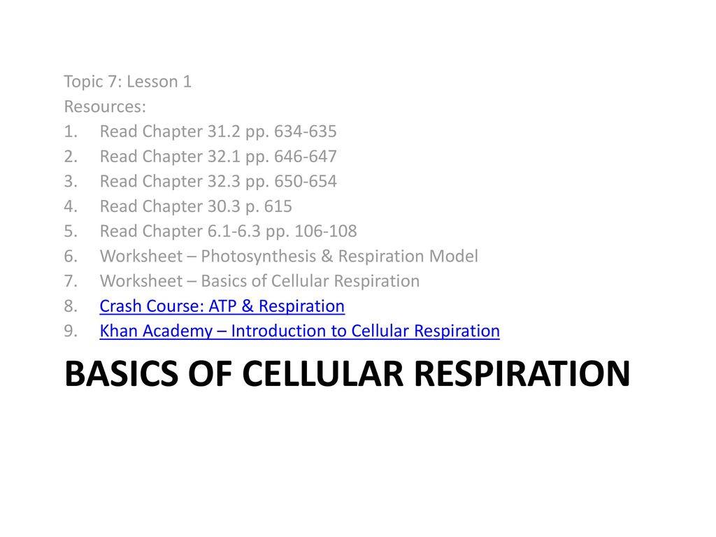 30 Cellular Respiration Review Worksheet