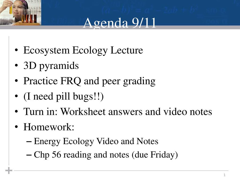 30 Ecological Pyramids Worksheet Answers