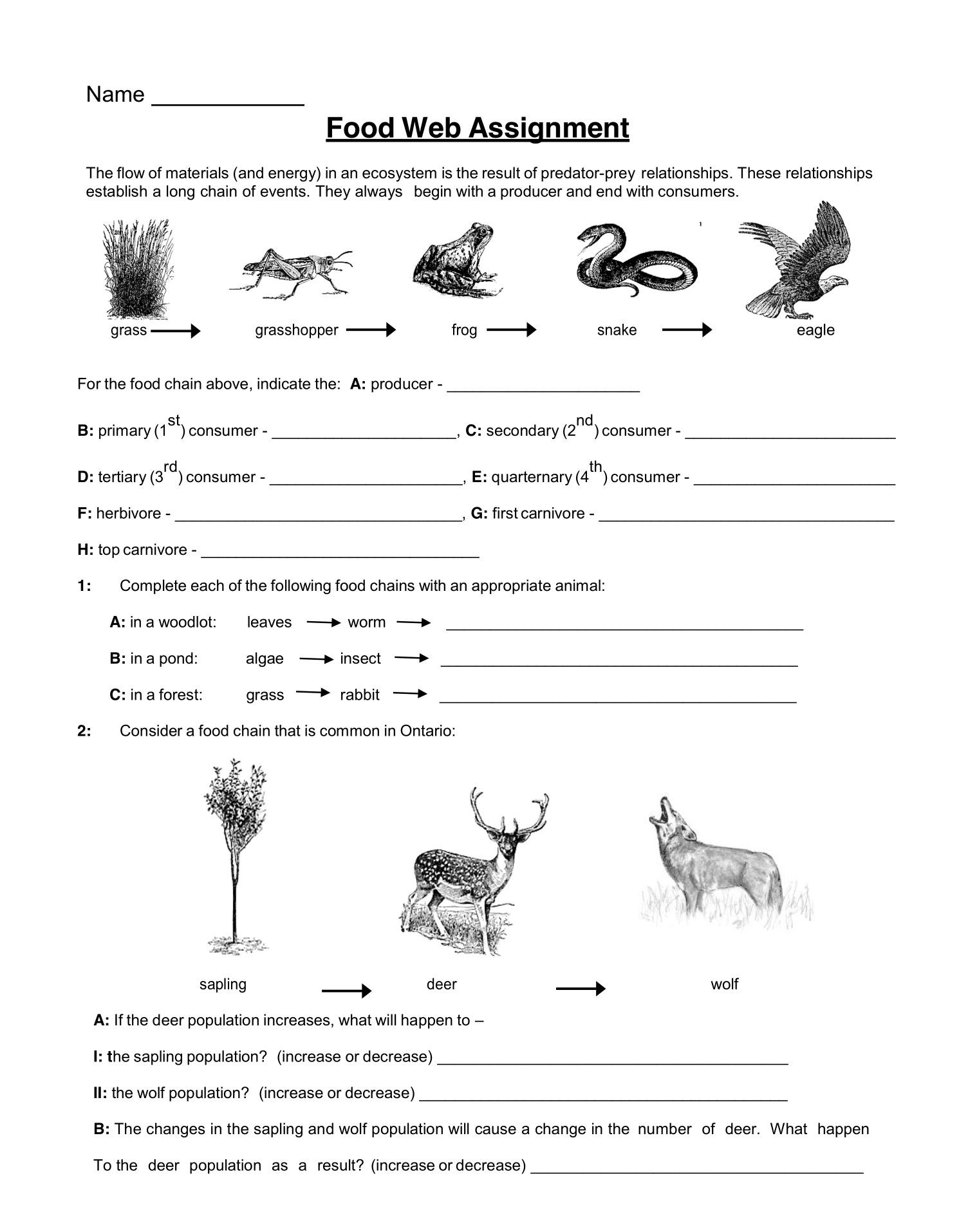 30 Food Chain Worksheet Answers