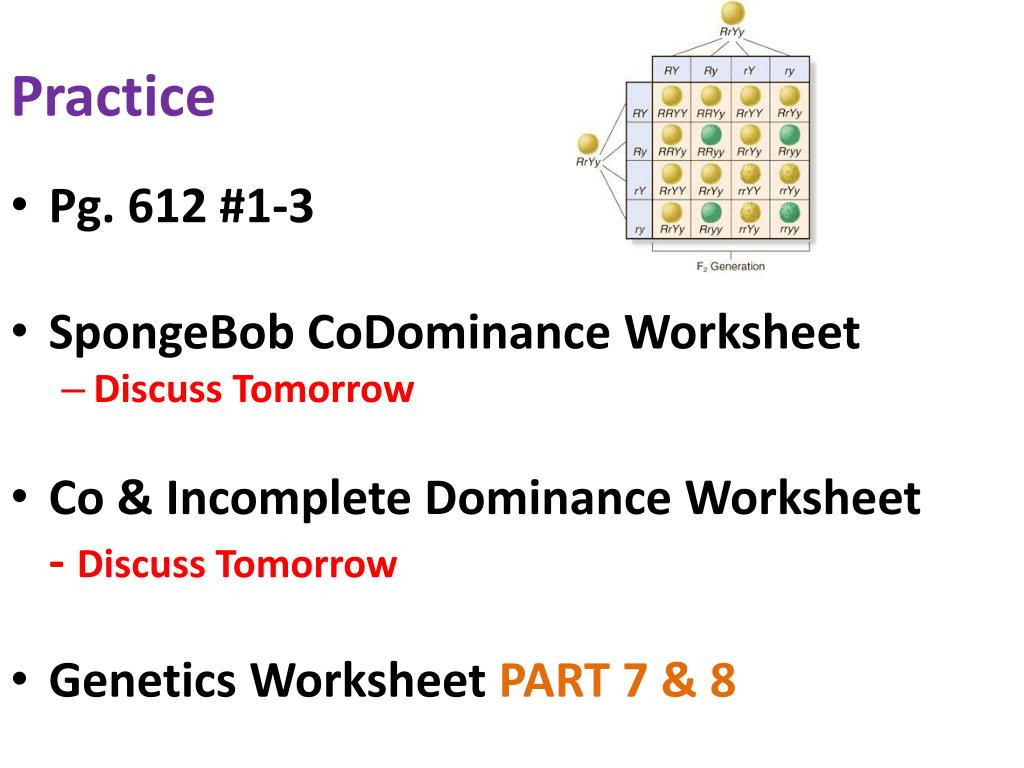 30 Incomplete And Codominance Worksheet