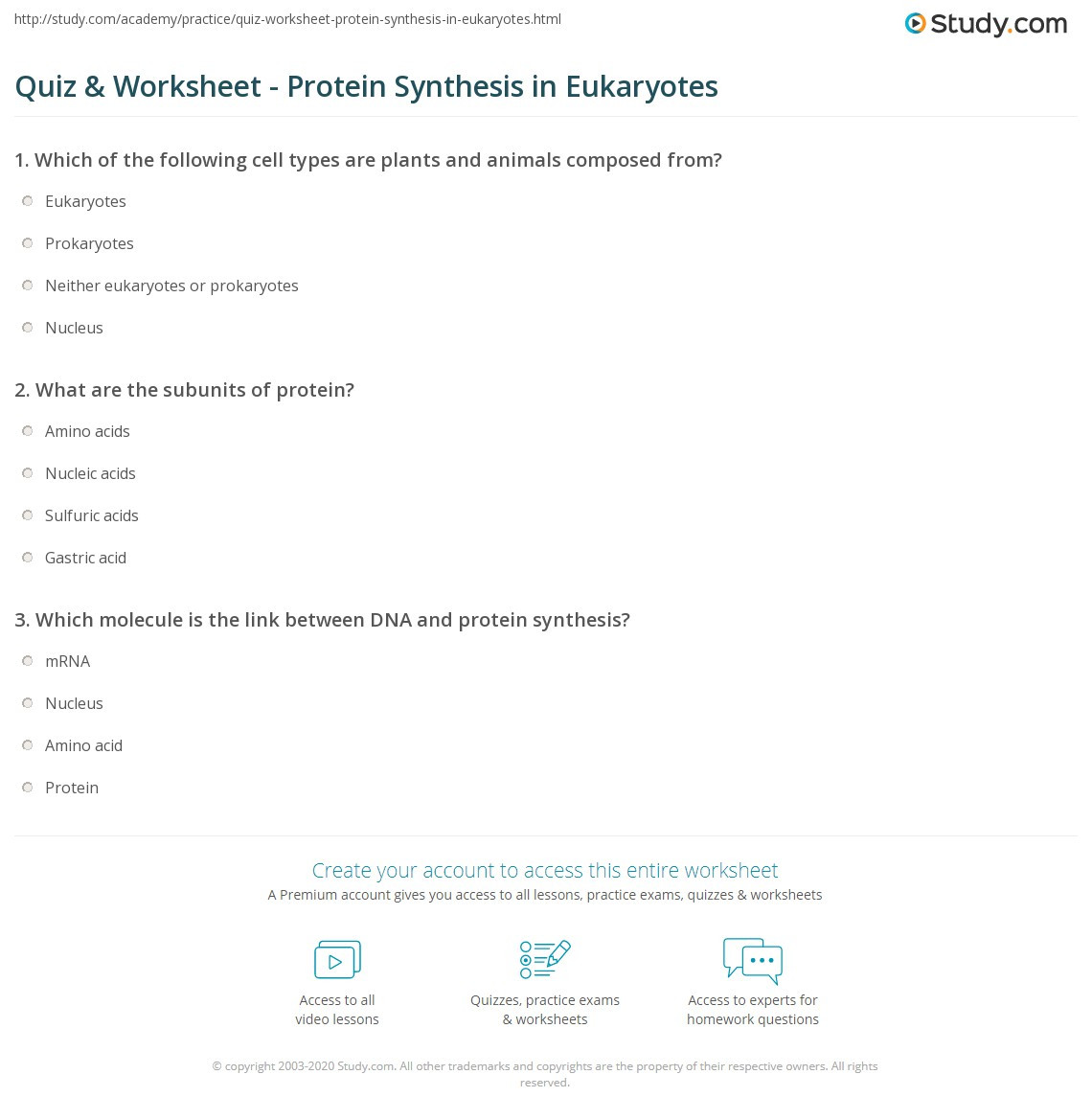 30 Protein Synthesis Worksheet Answer Key