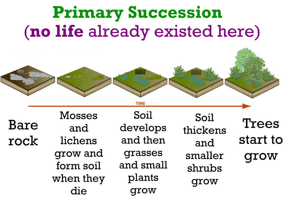 30 Ecological Succession Worksheet Answers