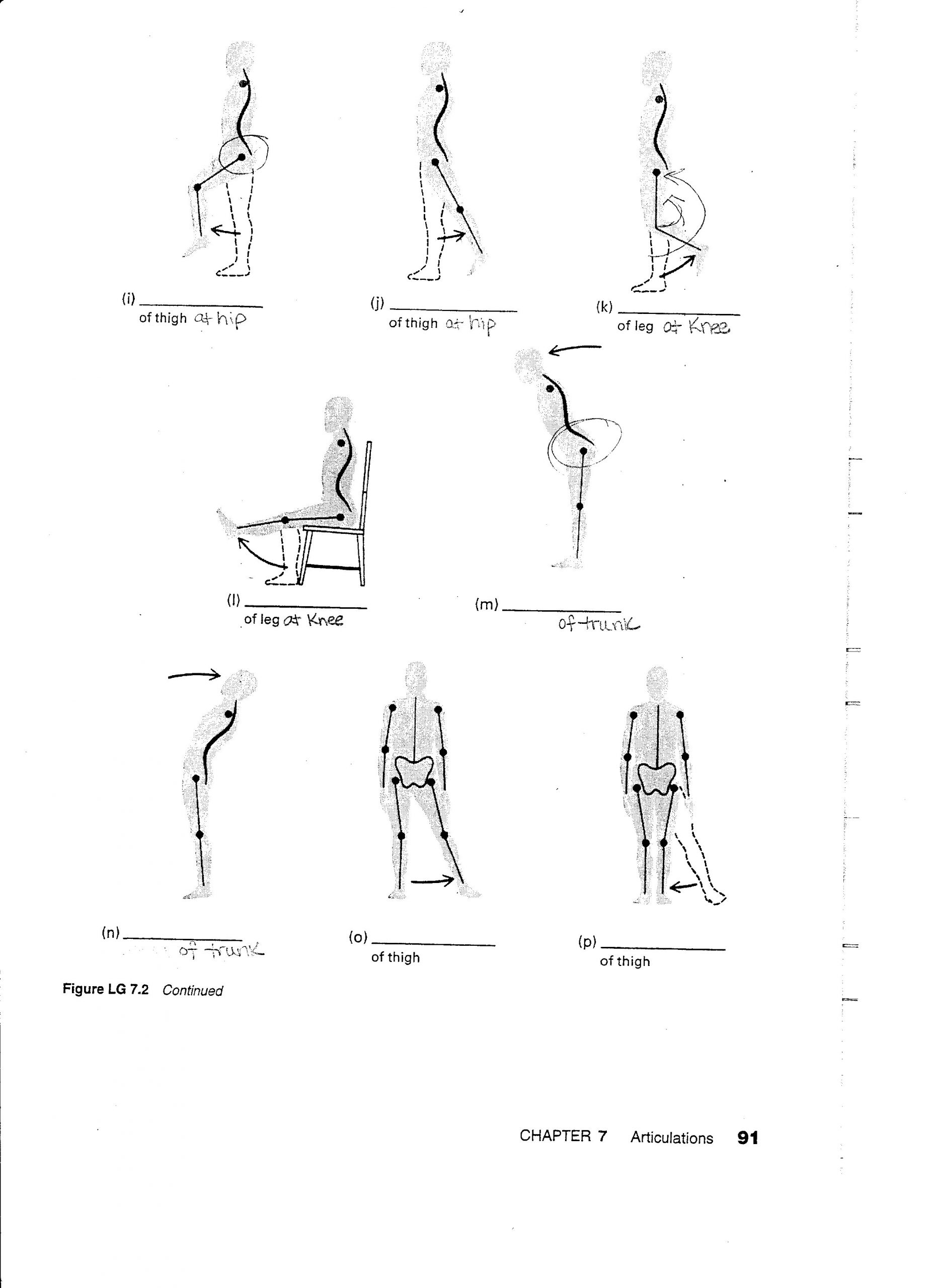30 Joints And Movement Worksheet